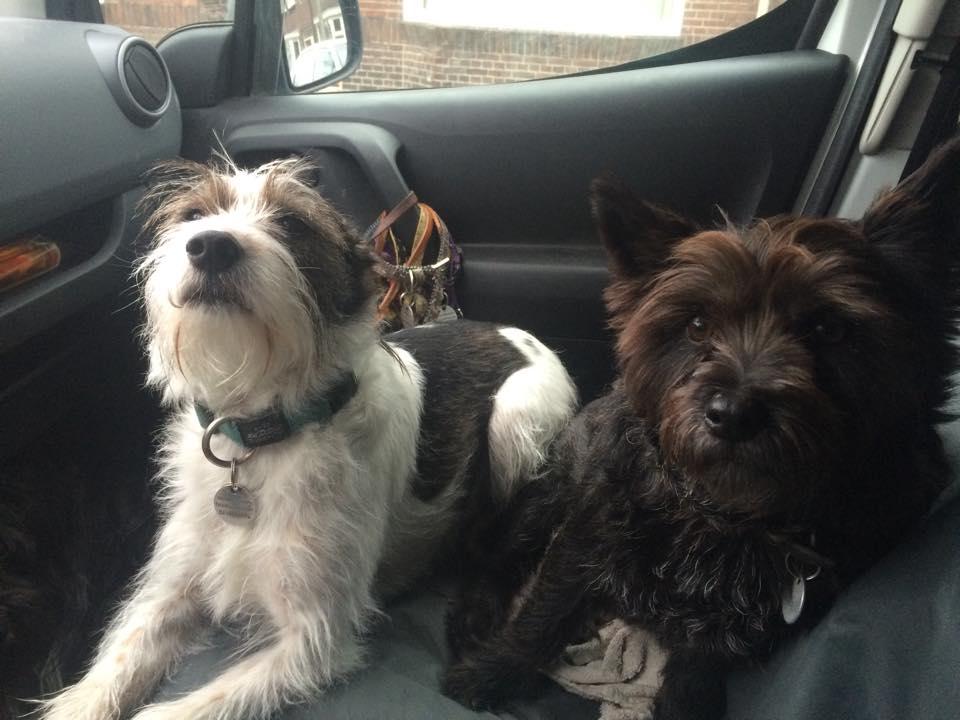 Topdogs Unlimited hondenuitlaatservice Utrecht - in de auto voor een wandeling