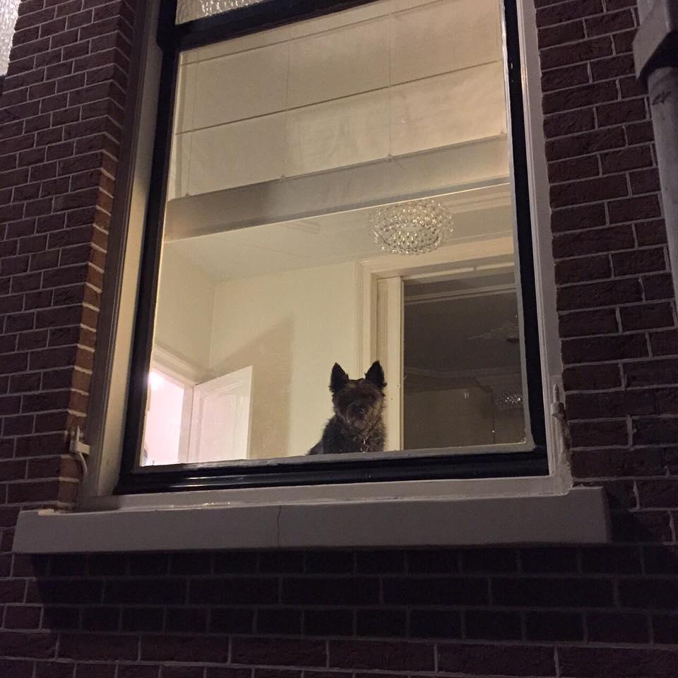 Topdogs Unlimited hondenuitlaatservice Utrecht - honden thuis ophalen