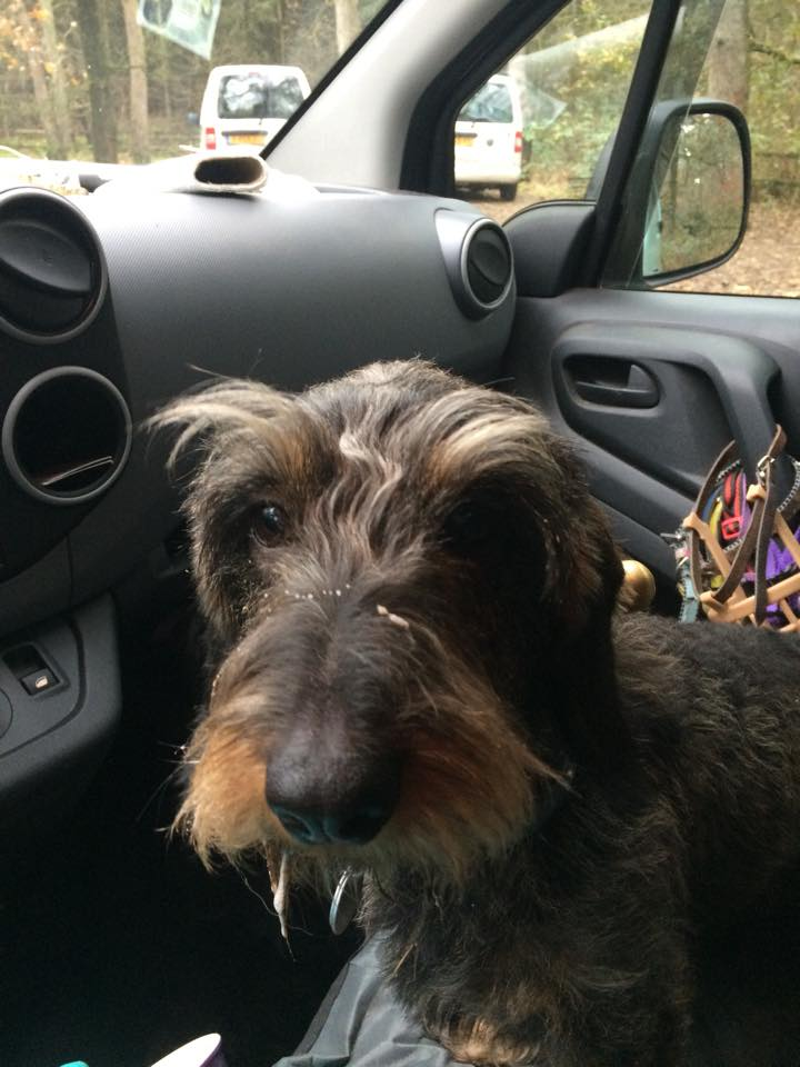Topdogs Unlimited hondenuitlaatservice Utrecht - hond in de auto